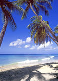 Barbados Caribbean beach Royalty Free Stock Image