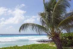 Barbados, Caribbean Royalty Free Stock Photography