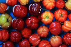 Barbados Cherry Floating en el agua Imagen de archivo