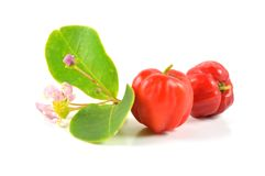 Barbados cherry Stock Photography