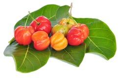 Barbados cherry Stock Photos