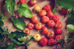 Barbados cherry on sack background Stock Images