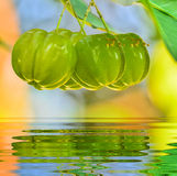 Barbados cherry on tree. Group Green Barbados cherry on tree and reflect in water Stock Photos