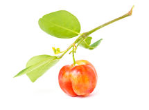 Barbados Cherry. Royalty Free Stock Photography