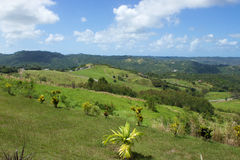 Barbados Countryside view Stock Images