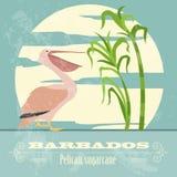 Barbados national symbols. Pelican, sugarcane. Retro styled imag Stock Image