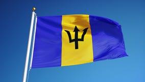 Barbados señalan por medio de una bandera en la cámara lenta inconsútil colocada con alfa libre illustration
