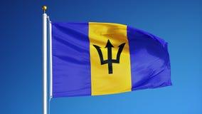 Barbados señalan por medio de una bandera en la cámara lenta inconsútil colocada con alfa ilustración del vector