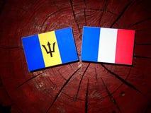 Barbados sjunker med franska sjunker på en isolerad trädstubbe Arkivbild