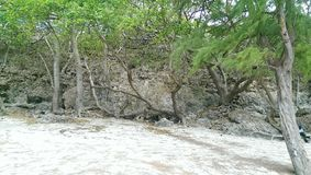 Barbados stränder Royaltyfri Bild
