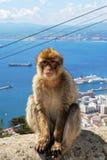 Barbape-Affe, Gibraltar Lizenzfreie Stockbilder