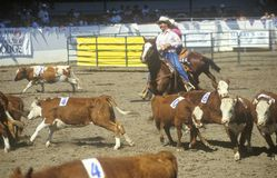Barbara Old Spanish Days Fiesta rodeo & Stock Hors Stock Photography