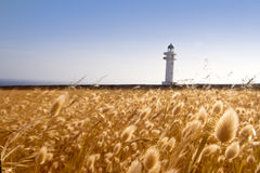 Barbaria cape lighthouse formentera golden meadow Stock Photo
