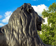 Barbary lion at Trafalgar Square, London. Statue of a lion near the Nelson column at Trafalgar Square in London. UK Royalty Free Stock Photos