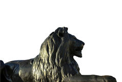 Barbary lion at Trafalgar Square in London on white background. Sculpture of   Barbary  lion at Trafalgar Square in London on white background Royalty Free Stock Image