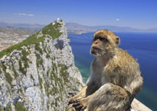 Barbary macaque and Gibraltar Rock Stock Photography