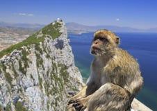 Barbary-Makaken und Gibraltar-Felsen Stockfotografie