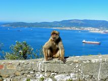 Barbary monkey ape and Aerial View Rock of Gibraltar, Europe Stock Image