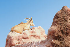Barbary sheep. Male of barbary sheep sit on the hill Stock Image