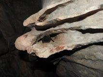 Barbastellus di Barbastella Immagini Stock Libere da Diritti