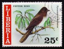 Barbatus di Pycnonotus dell'uccello del pepe, circa 1977 Fotografia Stock