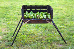 Barbecue. Grren peppers baking on a barbecue outside on the grass Royalty Free Stock Images