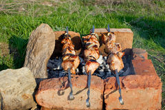 Barbecue. Skewers over charcoal in the nature of green grass Stock Photo