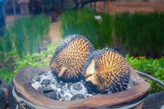 Barbecue durian on stove. The durian is brought to burn on stove to add flavor. Eat hot durian with extra nutrients Stock Image