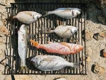 Barbecue-grill stock foto's