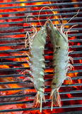 Barbecue Grilled prawns cooking seafood. Stock Photos