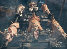 Barbecue lamb and pig Stock Image
