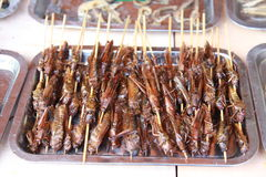 Barbecue locust Stock Images
