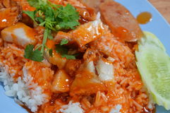 Barbecue pork dressing sweet red sauce on rice Stock Photos