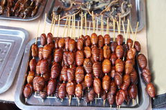 Barbecue pupa Royalty Free Stock Image
