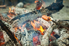 Barbecue sausages on sticks in bonfire Stock Images