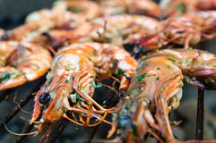 Barbecue Shrimps Stock Image