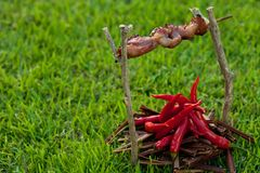 Barbecue on a stick with red pepper, depicting the Stock Photos