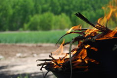 Barbecue sur le feu dans le domaine Photos libres de droits