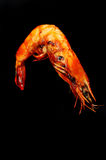 Barbecued shrimp Stock Image