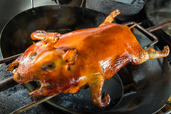 Barbecued suckling pig Stock Images