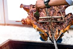 Barbecued suckling pig or Roasted suckling pig.  stock photos
