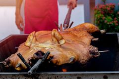 Barbecued suckling pig or Roasted suckling pig.  stock photography