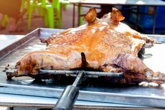 Barbecued suckling pig or Roasted suckling pig.  royalty free stock photo