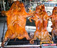 Barbecued suckling pig, street food stock images
