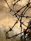 BARBED!. A beautiful picture of barbwire Royalty Free Stock Photo