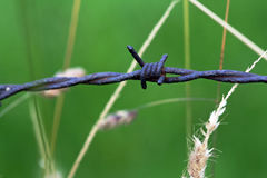 The barbed. A barbed in a green garden Royalty Free Stock Photos