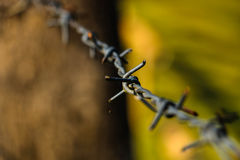 Barbed background Stock Photo