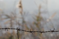 Barbed fence with ryegrass background Stock Images