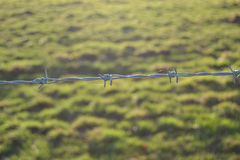 Barbed field. A single slither of barbed wire guards a field, the sunlit field behind is the only warmth in the photograph Royalty Free Stock Image