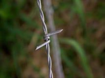 barbed przewody pionowe zdjęcie stock